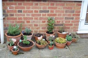 Sunbathing herbs