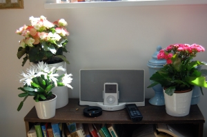 Bose soundock with blooms
