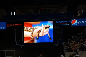 A baby gator on the Jumbotron of course.