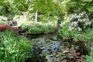 A display water garden