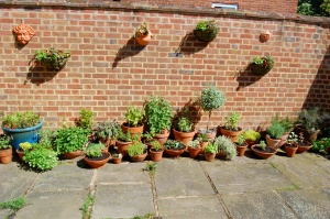The herbs got moved to the other side of the courtyard