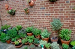 Part of the herb garden