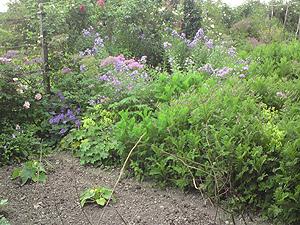 Hill Top Garden