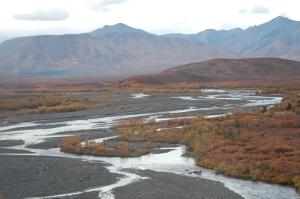 The tundra landscape of Denali