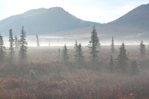Mist on the tundra