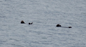 Sea otters being cute and....otter-y.