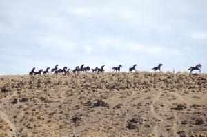 Wild horses monument.