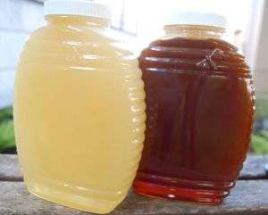 The lighter honey on the left was the honey we just extracted.  The darker honey on the right is the previously extracted batch.  It's amazing how much it can vary!