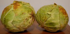 Future Sauerkraut