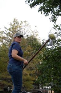 That is me with the very long fruit picker I am very familiar with now.